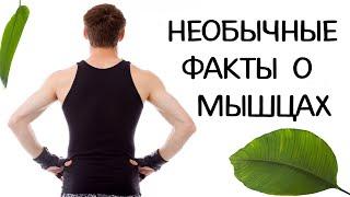 Необычные факты о наших мышцах. Познавательное видео.