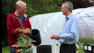 Seven tips to grow tomatoes in containers