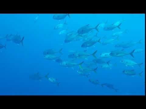 View from Atlantis Submarine - Barbados