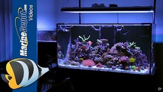 Featured Reef Tank: Cody's 120 Gallon Zoa Garden