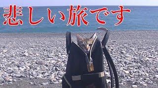 ペットキャリーバッグで小鉄と散歩している動画。 演歌に合わせてどうぞ...