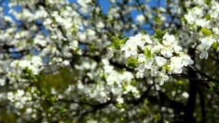 Красивые цветы, весна