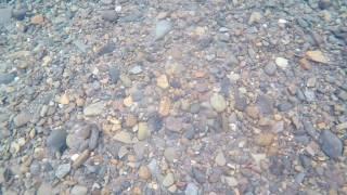 Зимняя рыбалка на Колыме .(Сытый хариуз., 2016-12-18T14:26:28.000Z)