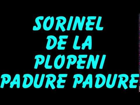 SORINEL DE LA PLOPENI PADURE PADURE