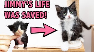 Saving a Sick and Starving Kitten  How Supportive Care Saved Jimmy
