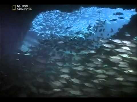 Самые хищные рыбы мира