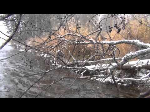 Растение кизил: фото и описание плодов дерева, посадка