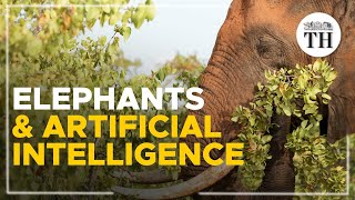 Using Artificial Intelligence to survey African elephants