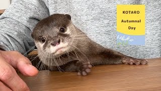 Kotaro the Otter One Day Like a Human