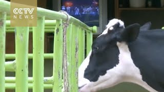 Music for milk: Kenyan farmers use television to improve output