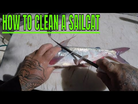 HOW TO CLEAN A SAILCAT