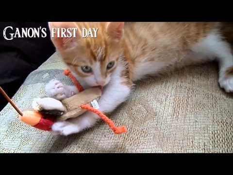 My new Kitten. Ganon