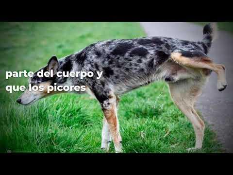 Mi perro se lame las patas, ¿qué le pasa? ¿por qué lo hace? · Wakyma