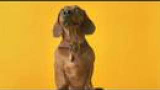 Pedigree Commercial - Anti-dachshunds