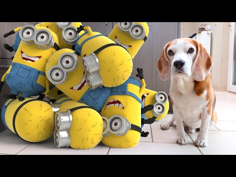 🍌 Best of Minions in Real Life vs Funny Dogs Louie and Marie 🍌