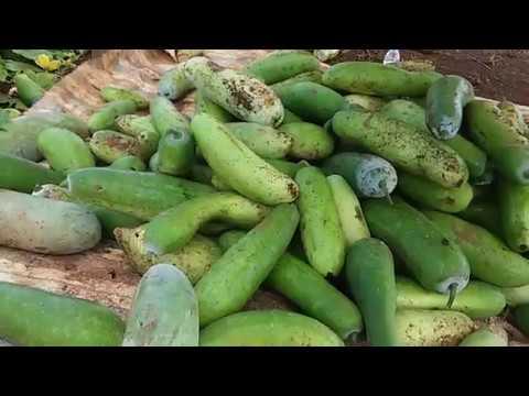 Nice Natural Vegetable Farm