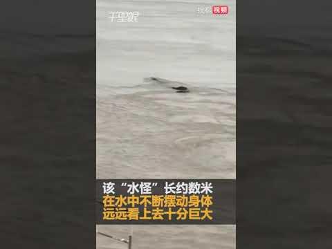 """视频:长江边惊现""""巨大生物"""" 水中不断摆动身体"""