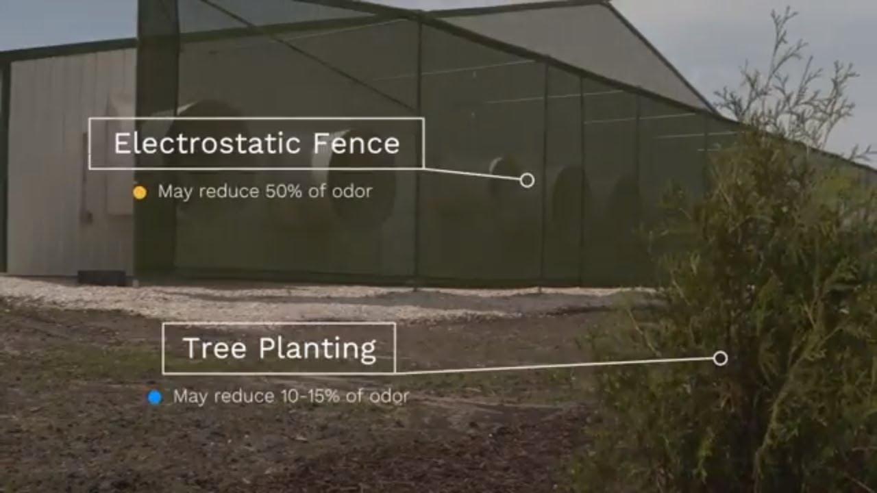 Iowa Minute: Iowa farmers use electrostatic fences to reduce pig