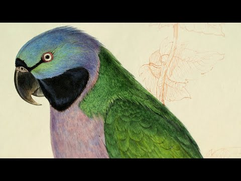 BBC - The Secret Life of Books Series 2 (2015) Part 2: Edward Lear's Nonsense Songs