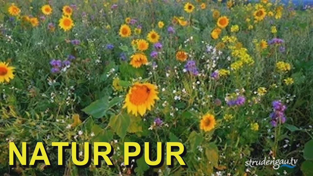 Morgenstund Hat Gold Im Mund