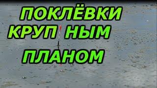рыбалка с ночёвкой.рыбалка в камышах с лодки на карася. рыбалка на поплавок