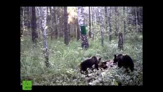 Фильм снятый фотоловушками в заповеднике