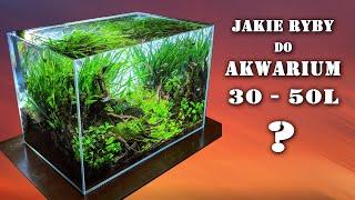 AKWARIUM 30 - 50L - jakie ryby? Specyfika małego zbiornika.