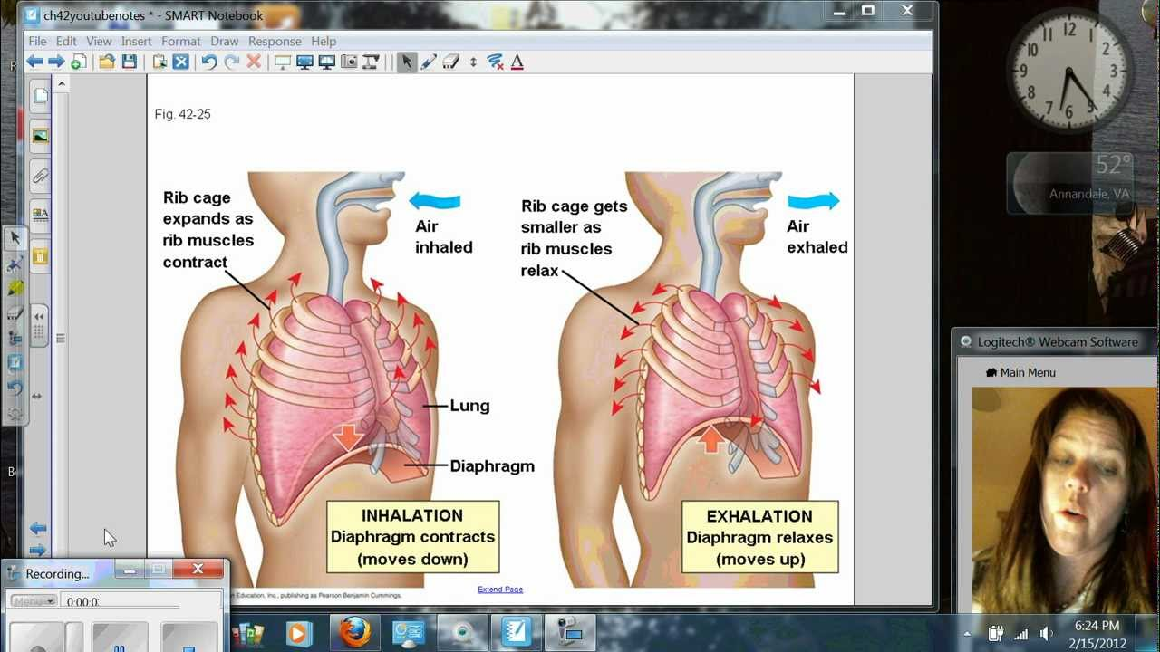 Negative Pressure Breathing.wmv - YouTube