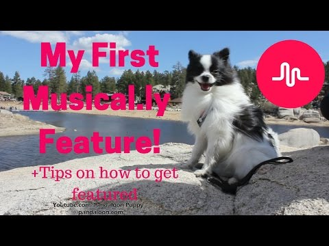 My First Musical.ly Feature + Tips! (Panda Puppy Au Naturale Vlogmas Day 5)