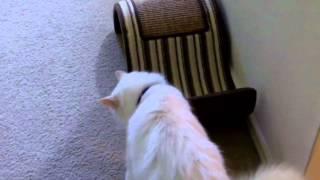 Pet Interviews - Talking Bird, Dog, Cat