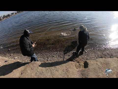 Pescando Truchas En Santa Ana River Lakes - Trout Bank Fishing