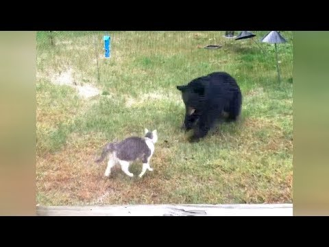 Are you ready for ULTRA FUNNY WILD ANIMALS? - Try not to DIE FROM LAUGHING!
