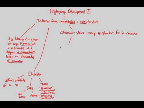 Phylogenetics - Phylo Dev I