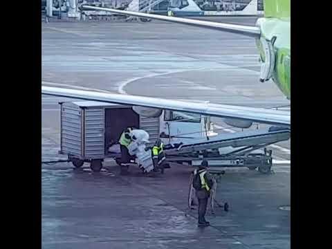 Перевоз багажа в S7!