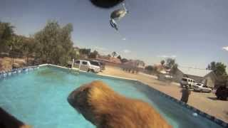 Iq K9 Training | Amazing Oceanside Swimming Dog! Dog Training