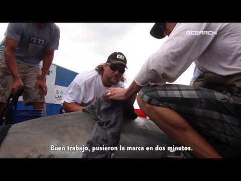 Expedition Galápagos: Tiger Sharks