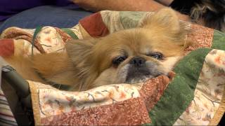 Therapy Dog Training - Wednesday, July 29 2015