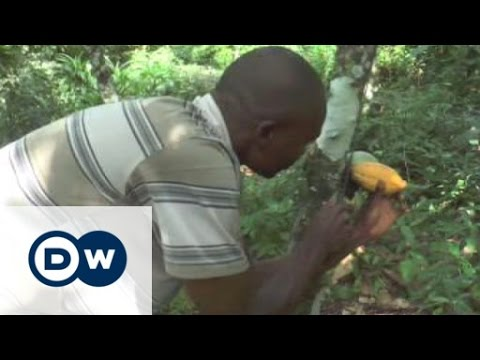 Non-melting chocolate made in Togo | Business
