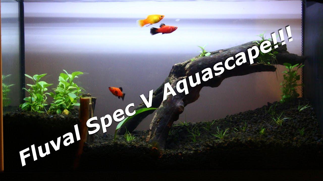 Aquascaping The Fluval Spec V Aquarium!