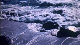 The Seed Coat - The Ripples In Kara Sea