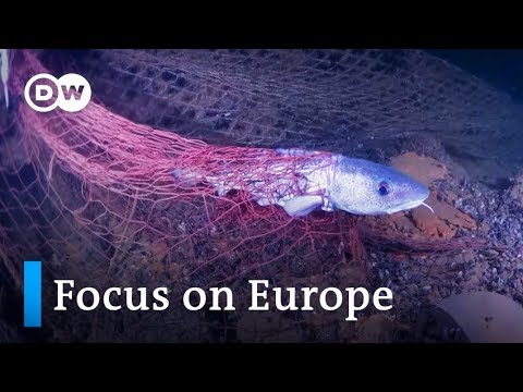 Busting Ghost Fishing Nets In The Baltic Sea | Focus On Europe