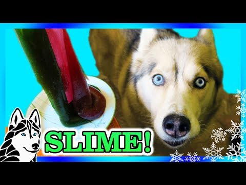 DIY SLIME FOR DOGS | NO GLUE SLIME | Edible Slime