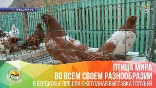 В Бердюжье прошла ежегодная выставка голубей