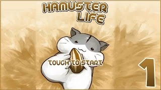 Hamster Life || So Many Hamsters!! - Episode #1