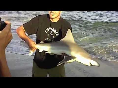 Accomplished Angler Pete Diaczenko Reeling in a 5 Foot Brown shark.