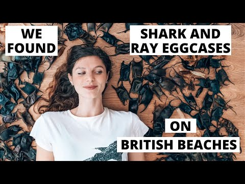 You wont BELIEVE these can be found on BRITISH BEACHES! We found and identified SHARK and RAY Eggs!