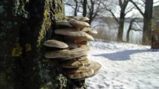 Зимняя жизнь растений.