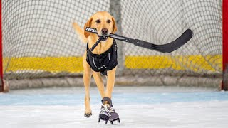 This Skating Nevada Dog Is a Miracle on Ice