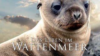 Das Leben im Wattenmeer (2014) [Dokumentation] | Film (deutsch)