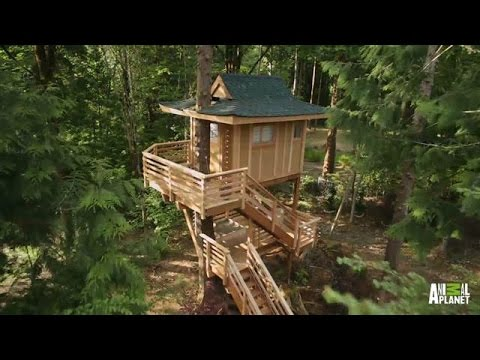 behind the build towering treetop teahouse treehouse masters
